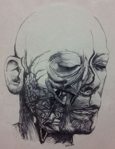 Dissected Face